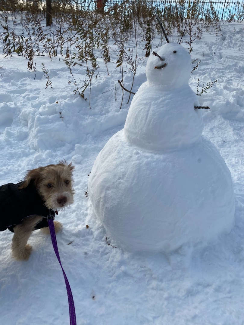 a dog next to a big snowman