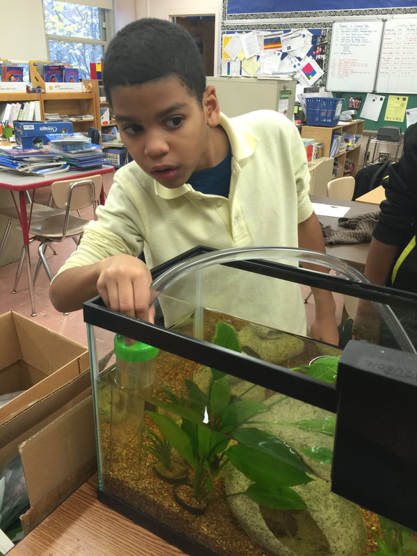 Student looking at fish tank