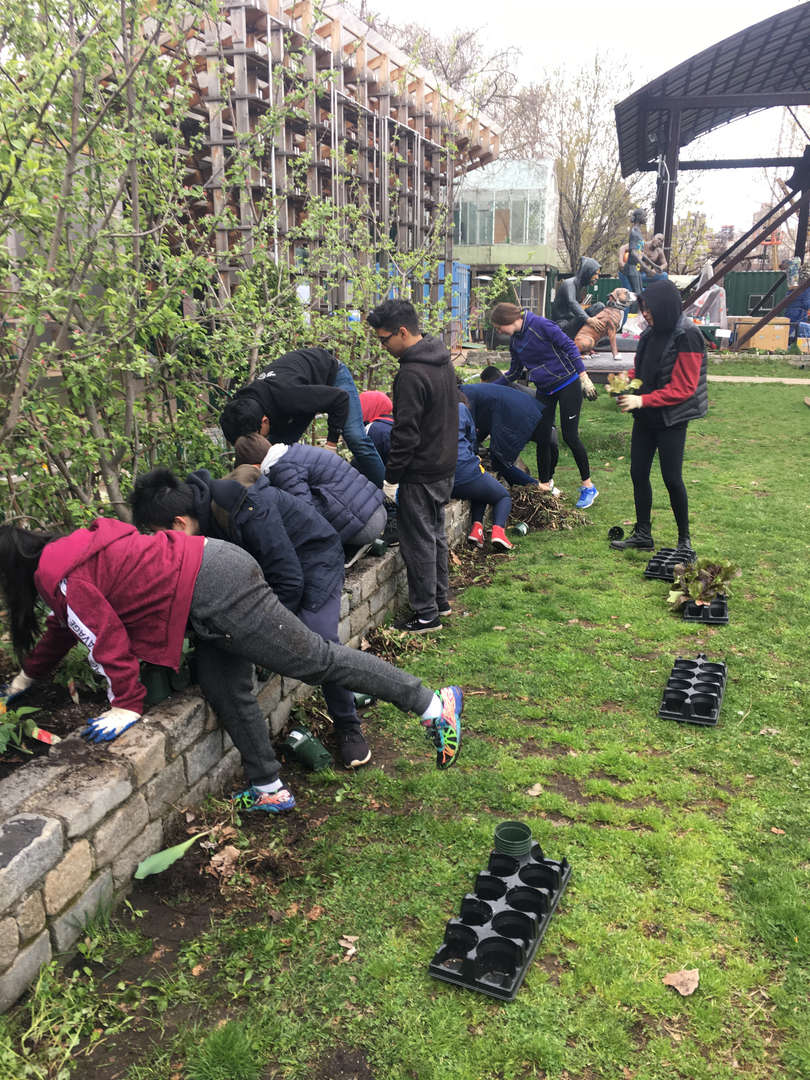 Students lean into the raised garden bed to tend to their plants
