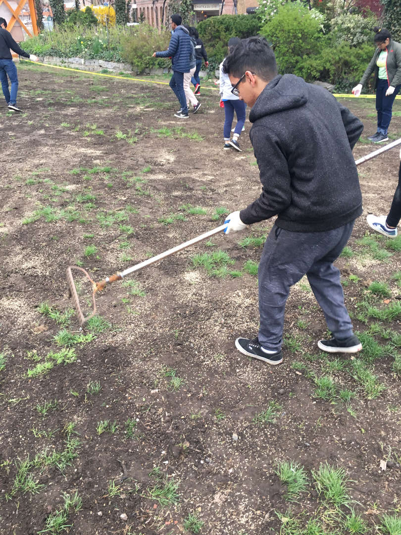 Student wearing work gloves rakes the lawn
