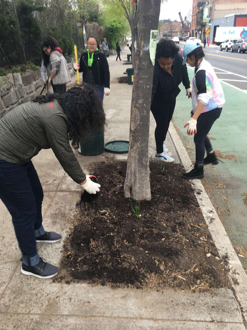 Students grab handfuls of dirt from a tree planted on the sidewalk