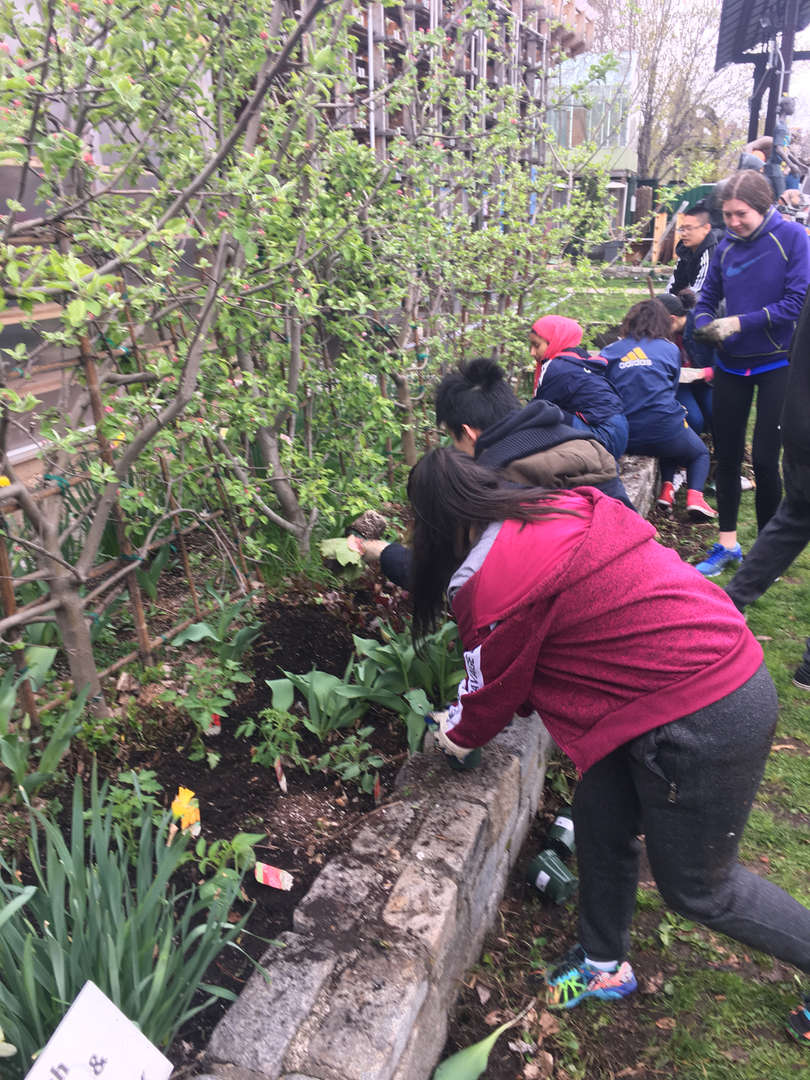 Students bend over to adjust plants in their garden bed