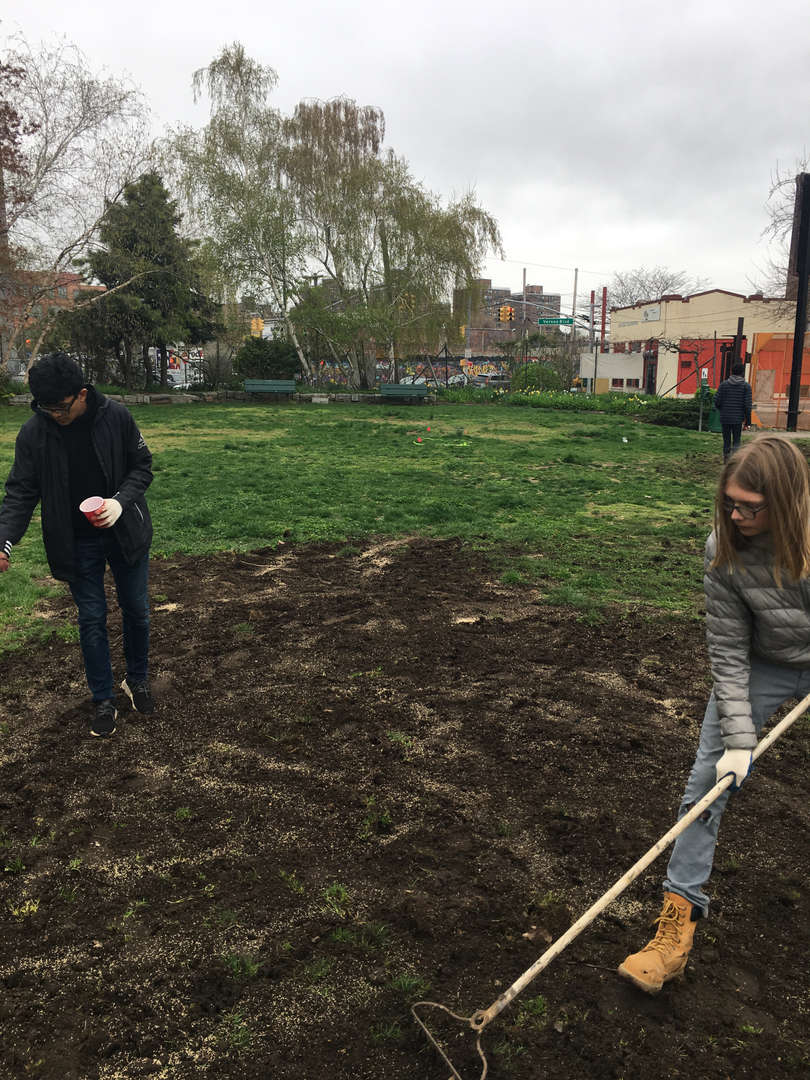 Girl in a gray coat rakes while a student in black sprinkles seeds on the ground