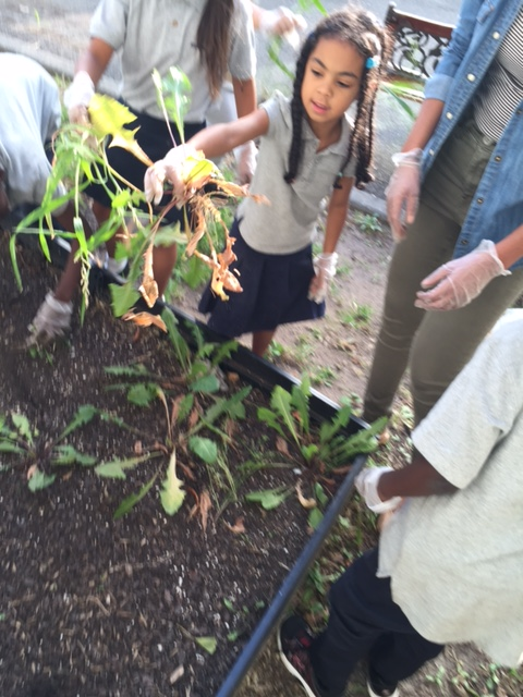 Four students pulling plants from dirt