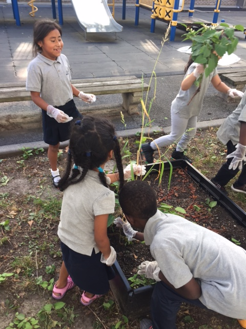 Students wearing gloves and planting in a garden plot