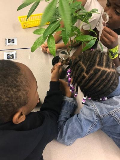 Observing plant life