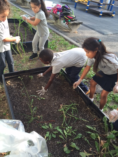 Students tending to plants