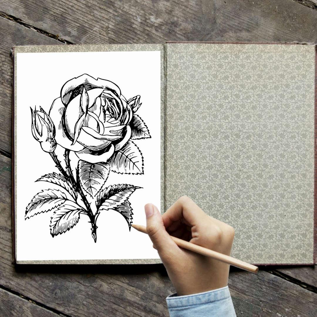 Coloring rose