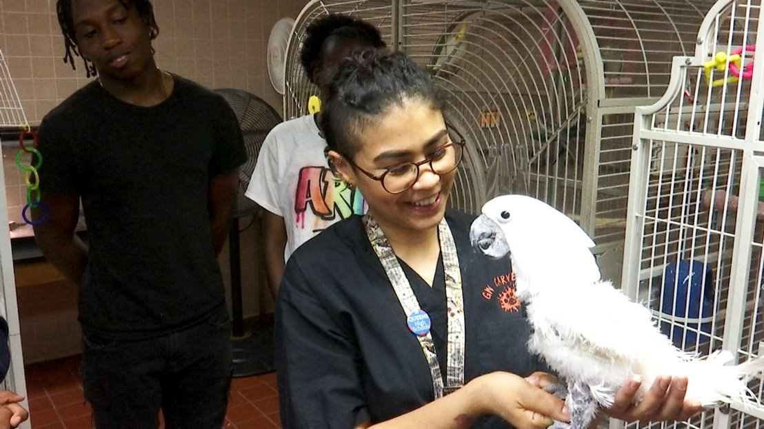 A white bird perches on a girl's arm as another student looks on