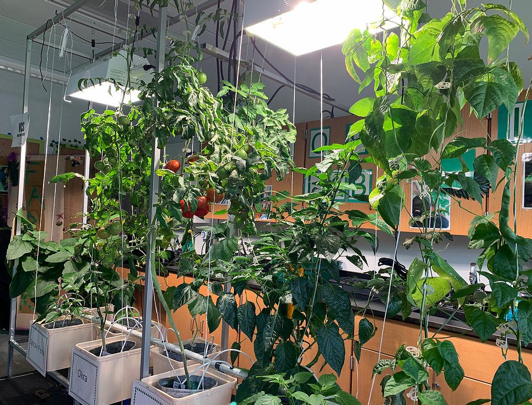 Hydroponic Garden Lab