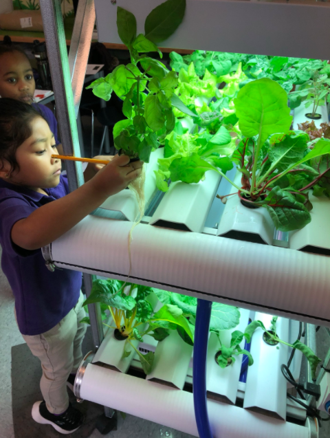 Students work in the Hydroponic Lab