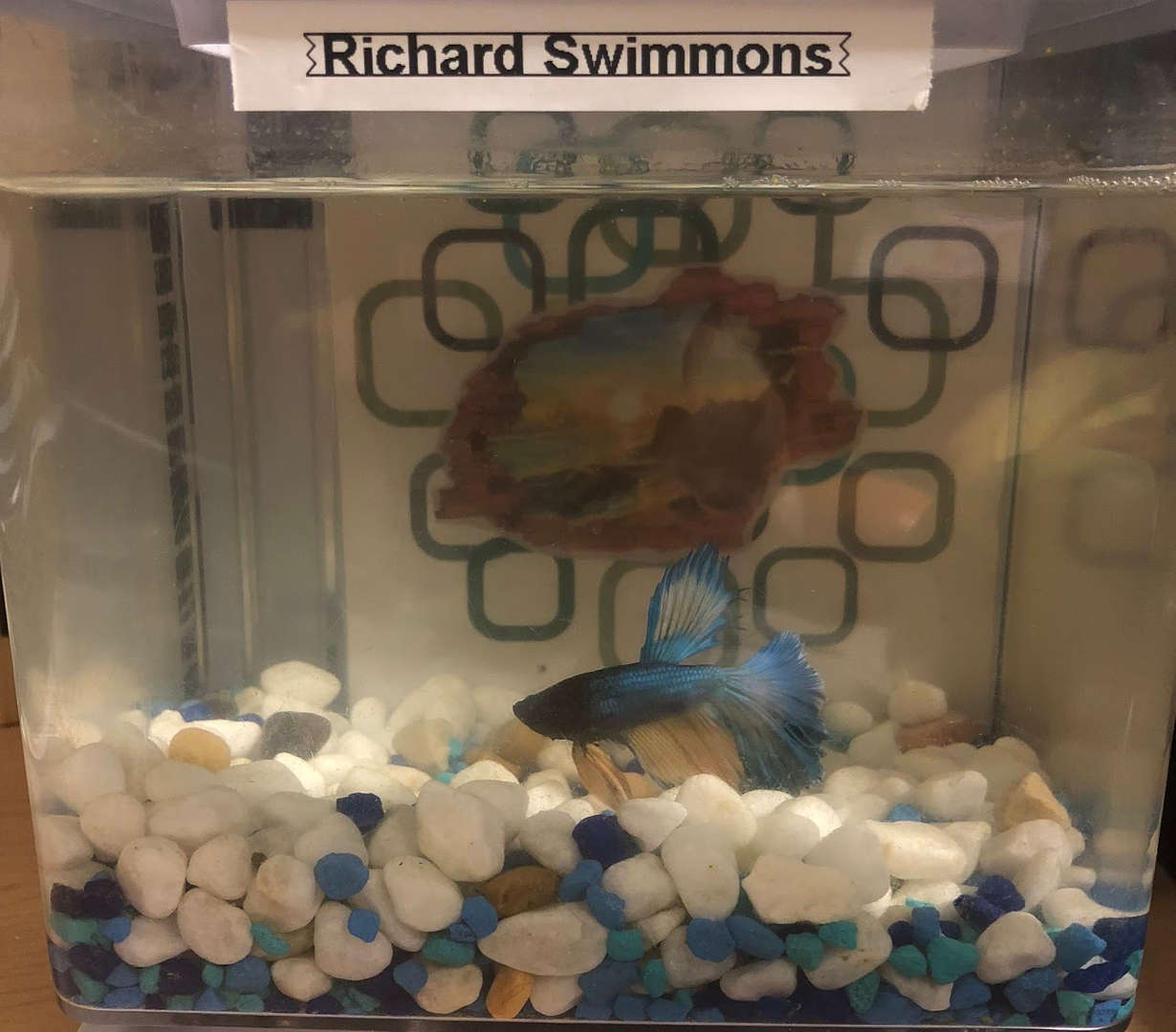 "This is Richard Swimmons.    Please feel free to drop by and say ""HI"" to him!"