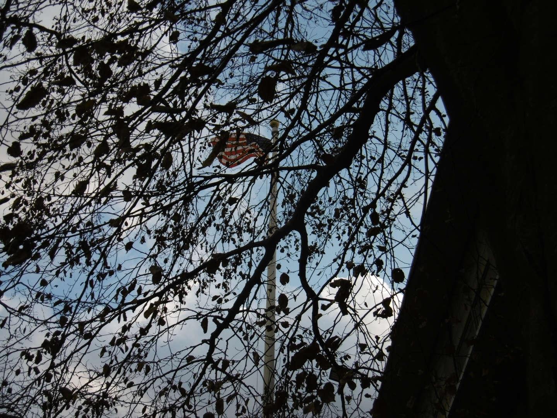 USA Flag peeking behind tree branches.
