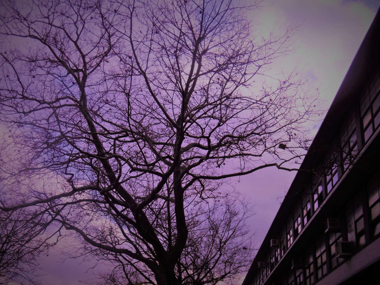 Purple Filtered Photo of Tree.