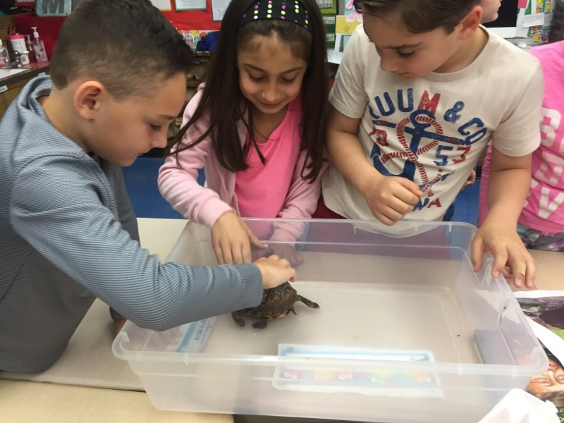 Fun with Mrs. Myers and her friends turtles