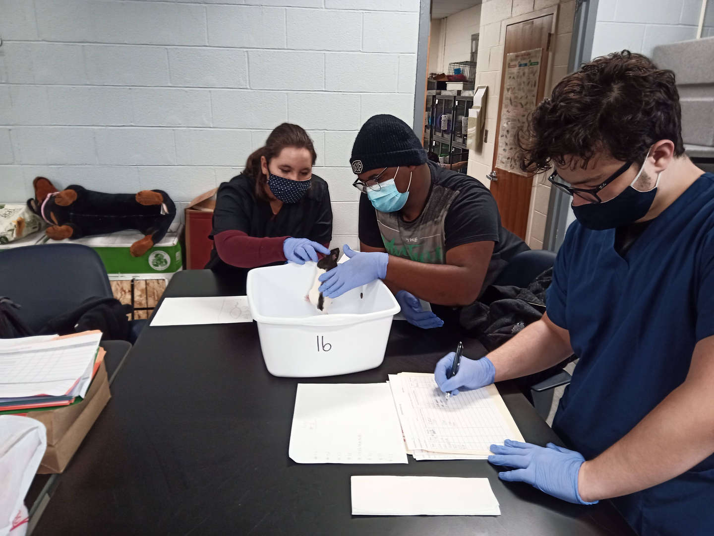 Students observe rats
