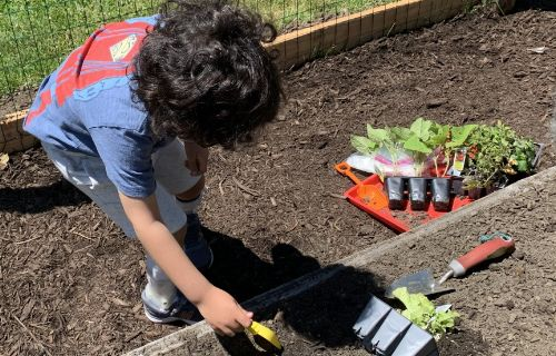 Student planting herbs.