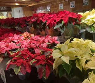 Flowers in Stew Leonard's Store