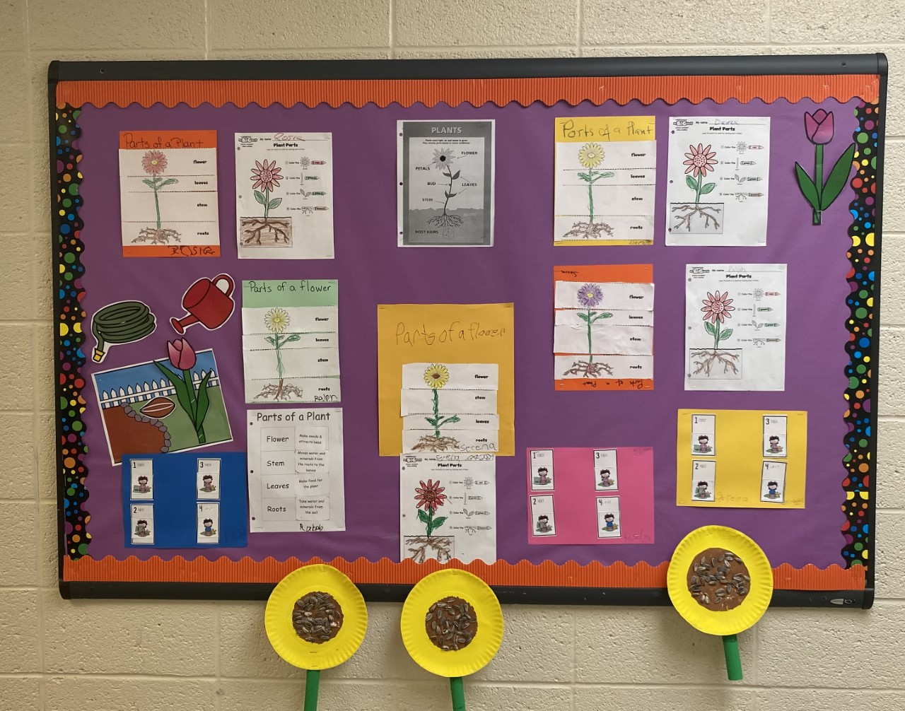 Parts of a Flower Bulletin Board.