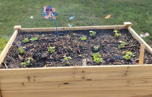 Small garden sprouting with a pinwheel.