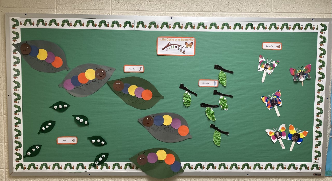 Butterfly Life Cycle Bulletin Board.