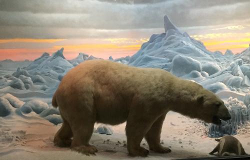 a bear in a winter scene exhibit