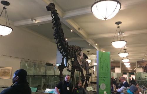 Dinosaur exhibit again