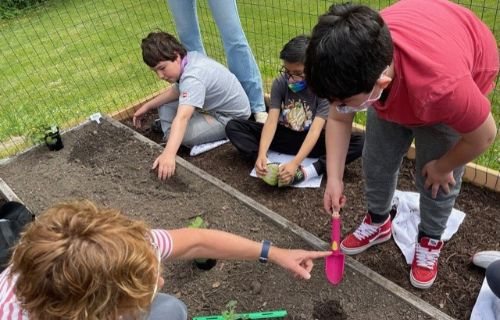 Students planting the seeds.