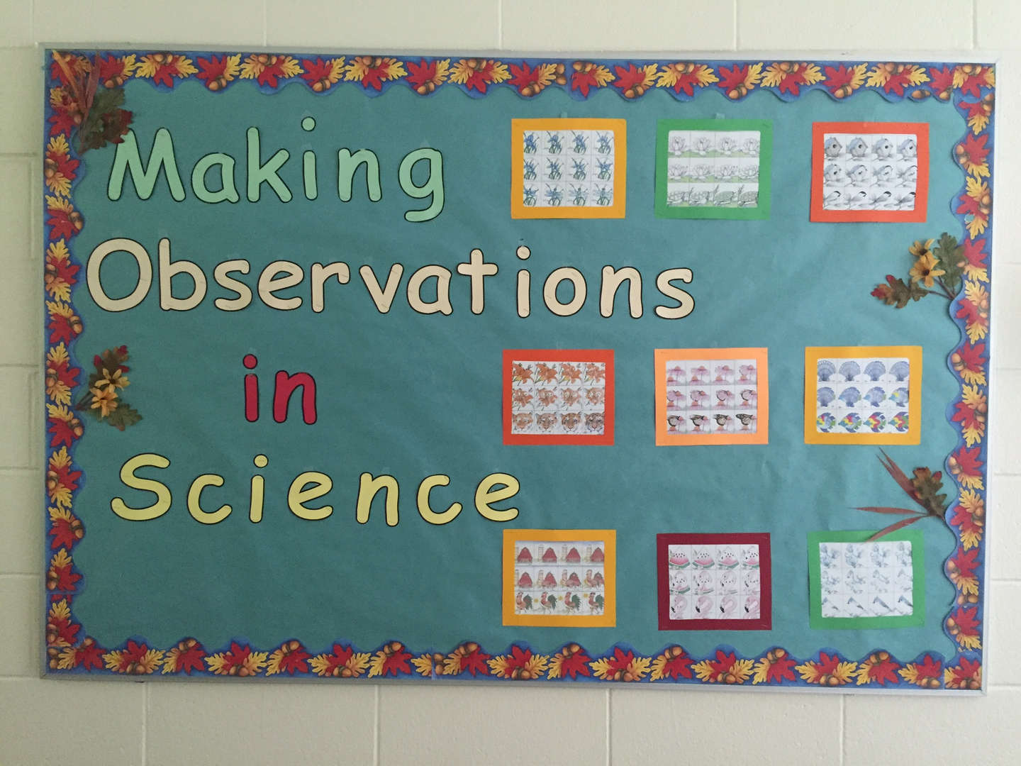 Making observations in Science