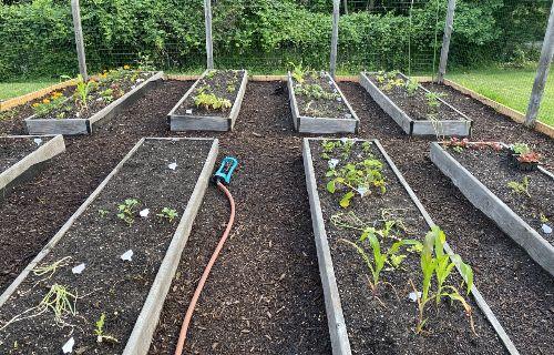 Garden beds.