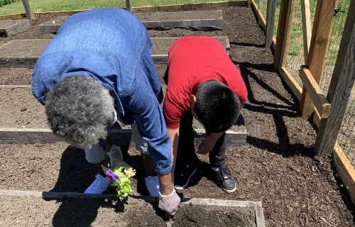 Staff and student gardening together.