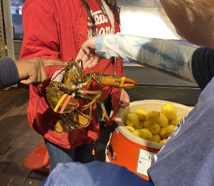 Another student touching a live lobster in Stew Leonard's store