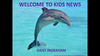 Picture of Daisy dolphin