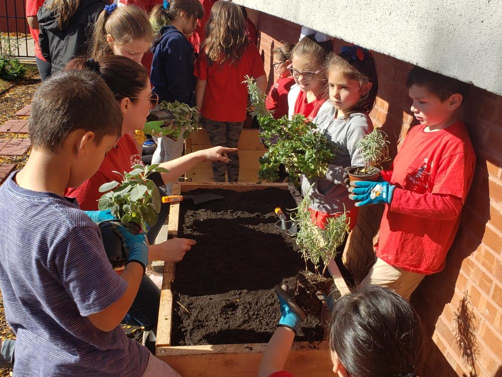 Students planting the seedlings